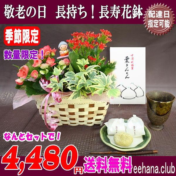 中津川「栗きんとん」と長寿花鉢セット!