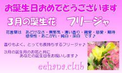 3月の誕生花バースデーカード