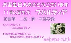 11月の誕生花バースデーカード