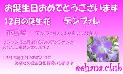 12月の誕生花バースデーカード